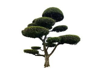 Printed kitchen splashbacks Bonsai green tree isolated on white background