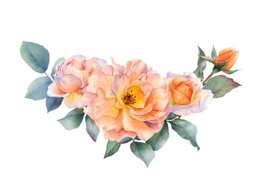 Hand drawn watercolor arrangement with picturesque tea rose flowers, rosebuds and leaves isolated on a white background. Floral botanical illustration for wedding invitations, greeting cards, patterns
