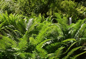 closeup of lush green fern in the forest