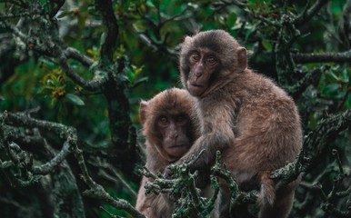 Picture of two monkeys holding each other on tree branches in the jungle with a blurry background