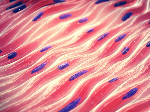 Myocytes, Smooth muscle cell tissue