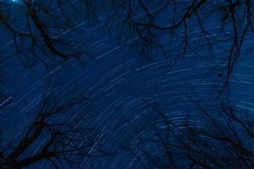枯れ木と星空(コンポジット撮影)