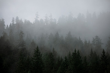 Fog rises out of a forested hillside on a summer morning in Canada.