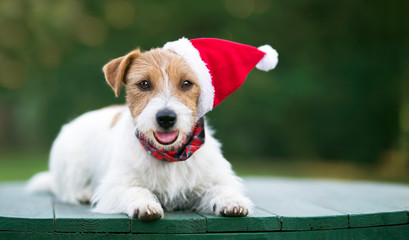 Cute christmas holiday happy smiling santa pet dog puppy on green background with copy space