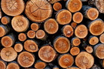 Pile of sawn wood logs for background or texture