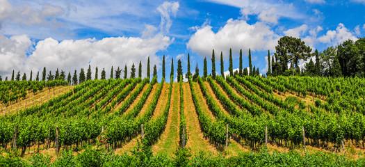 Panorama eines Weinberg mit Weinreeben in der Toscana