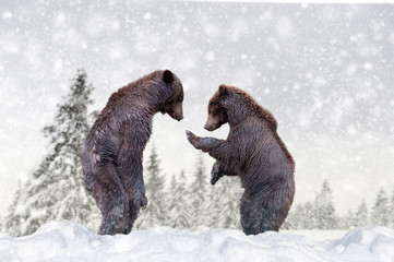 Wall Mural - Bear in a snow on winter background