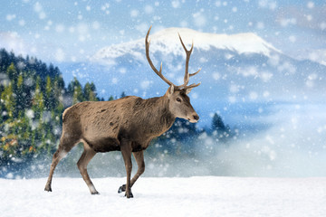 Wall Mural - Deer in a snow on winter background