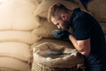 young worker sniffing a fistful of fresh raw beans from burlap bag at the coffee roaster warehouse