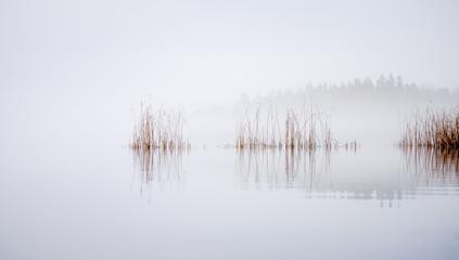 Reeds waving in the wind on a misty morning at Lake Littoinen, Kaarina, Finland. - 308567537