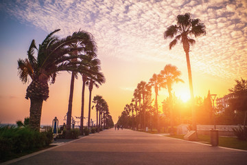 Limassol at sunset. Island of Cyprus. Molos park with palm trees, Limassol promenade or embankment in evening. Mediterranean sea resort. Wall mural