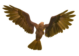 Fototapete - deepsea eagle attacking on white background top rear view