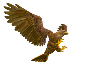 Fototapete - deepsea eagle attacking on white background