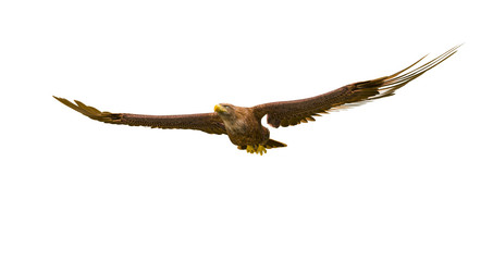 Fototapete - deepsea eagle floating on white background