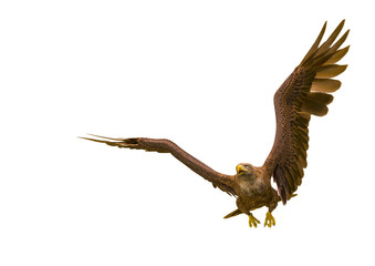 Fototapete - deepsea eagle hunting on white background with space copy
