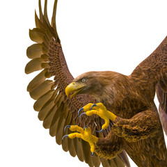 Fototapete - deepsea eagle hunting on white background side view close up