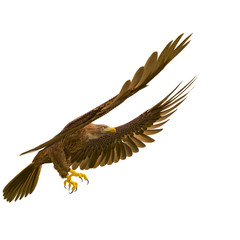 Fototapete - deepsea eagle landing on white background side view