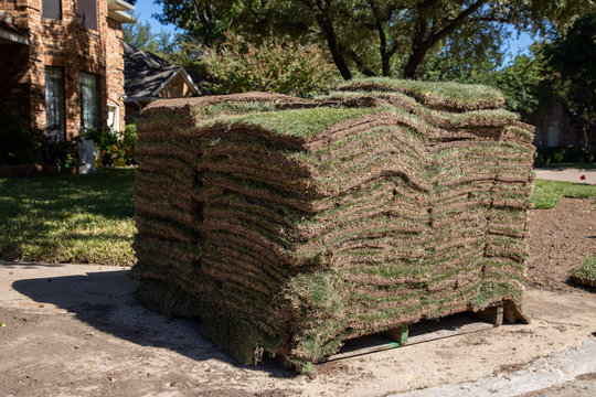 Palette full of new Zoysia grass, ready for installation