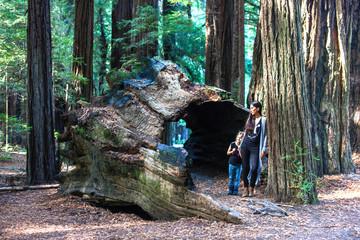 Riesen Baumstamm in den Redwoods mit Personen