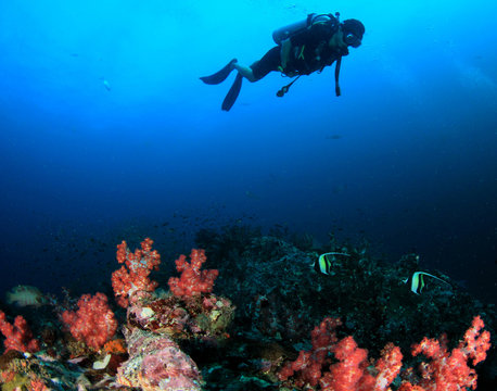 Woman scuba diving on coral reef