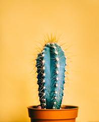 Keuken foto achterwand Cactus Green cactus in decor pot over bright orange pastel background. Colorful yellow summer trendy creative concept.