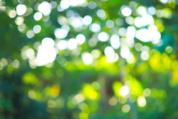 Foto auf Acrylglas Lime grun Abstract green bokeh out of focus background from tree in nature