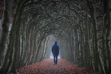 Papiers peints Gris A man walking in a tunnel of trees on an hazy day in autumn.