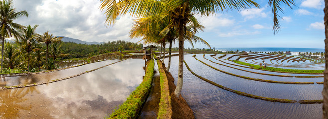 scenic view of rice terraces in bali indonesia panorama