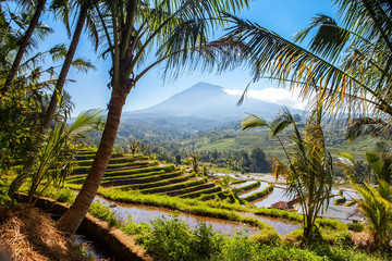 Garden Poster Rice fields scenic view of rice terraces in bali indonesia with volcano