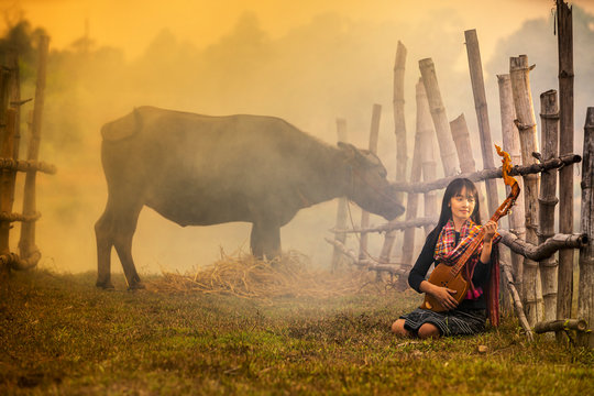 Girl playing music in a buffalo rice field. Rural women playing mandolin guitar at countryside in Asia.