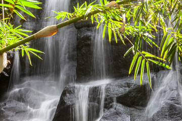 detail view of bamboo leaves with waterfall in bali indonesia