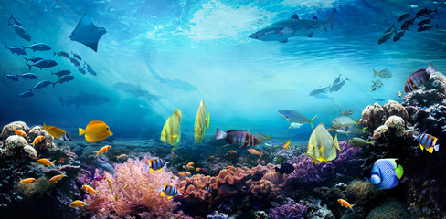 Photo Blinds Coral reefs Underwater sea world. Life in a coral reef. Colorful tropical fish. Ecosystem.