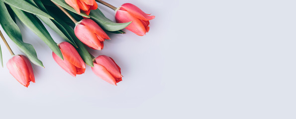 Fotorolgordijn Tulp Red tulip flower on natural white background from above. Spring bud bouquet creative frame design.