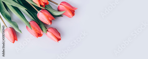 Red tulip flower on natural white background from above. Spring bud bouquet creative frame design.