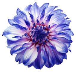 Poster Dahlia dahlia flower white-blue. Flower isolated on a white background. No shadows with clipping path. Close-up. Nature.