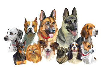 Big and small dog breeds 2