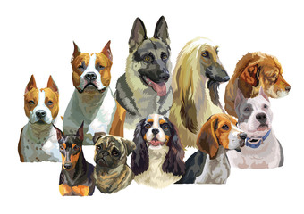 Big and small dog breeds