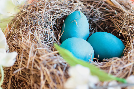 Real birds nest in a flowering tree with Robin blue eggs. Selective focus with blurred background.