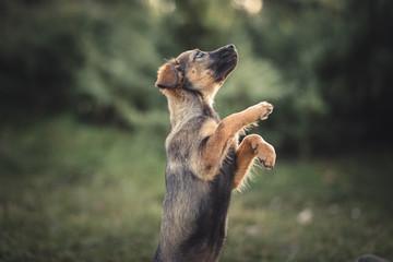 Cute puppy picture