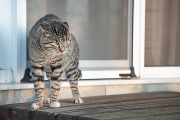 Scared cat outdoors.