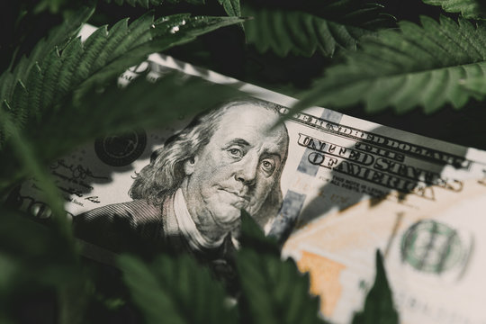 American dollar bill on cannabis leaves. Taxation and marijuana. The economy of hemp industry. Tax on weed. Money and pot. Cannabis finance. Revenues in the marijuana industry