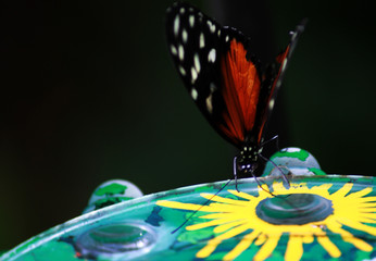 Colorful black, red, white dotted butterfly on a Plato