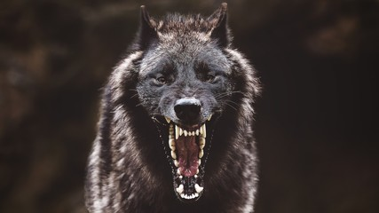 Foto op Aluminium Wolf Closeup of a black roaring wolf with a huge mouth and teeth with a blurry background