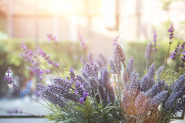bush of lavender flower decoration on morning light