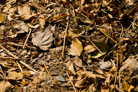 Top view crowd of dried leaves and branches on the soil ground