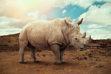 Poster de jardin Rhino White rhino in South Africa