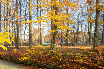 walking the dog in autumnal forest near utrecht in holland