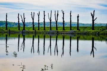 Baumbeschnitt am Ufer der Oder bei Frankfurt (Oder)