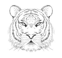 Door stickers Hand drawn Sketch of animals Graphic sketch tiger portrait, front view, hand drawn vector illustration