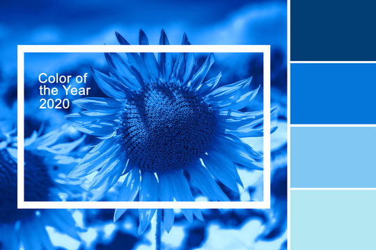 Beautiful sunflower with classic blue color palette